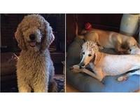 愛犬美容後全身無毛 正妹主人崩潰:我媽毀了我的狗!