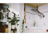 誰說貓咪不會飛!貓咪們的瞬間彈跳攝影