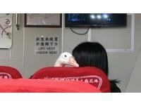 大白鵝「爾娥」搭船遊小琉球 媽:我「女鵝」有公主病