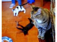 爬最高就是老大? 貓咪喜歡待在高處「4大背後原因」
