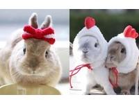 帽帽就是我最愛的單品!毛帽控人氣兔兔的冬季暖日常