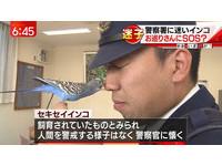 愛動物日本暖警照顧迷路鸚鵡 玩在一起直呼:好可愛!