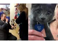 2年紀念日獨自去收容所 小貓脖掛「嫁給我好嗎」驚呆她