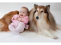 狗狗是全家人的減壓治療師! 別讓寶寶錯過最好的玩伴~