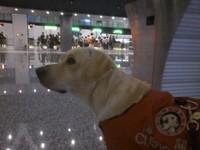 神經質貴賓狗→暖心治療犬 遇見好主人讓牠重獲新生