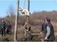 避邪驅魔?保加利亞「旋轉儀式」 狗狗噗通落水嚇到發抖