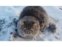 貓踩水坑遭「冰凍封印」 戰鬥民族情侶祭法寶即刻救援
