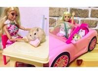 鼠界新之助駕到!最愛跟芭比子姊姊兜風的社交王鼠鼠