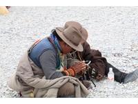 比照外配辦理! 在台藏人及海外子女可依法申請居留