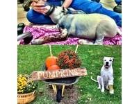 槍口下的藍色狗狗斷腿了 趴著用爪子觸碰彼此的友誼