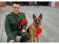 退役消防兵想帶走搜救犬...准了!兄弟齊戴「光榮」胸花