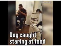 餓犬猛盯主人食物 被抓包竟撇頭斜眼瞪人