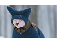 陪主人雪地散步 無毛貓眉頭深鎖「><」:冷死寶寶啦!