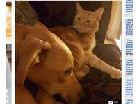 邪靈附身?貓失蹤3月歸來後「黑化」 狗每天慘遭霸凌