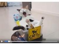 貓爺搭掃地機器人巡地盤 網怒敲碗:快生產人類尺寸的!
