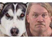 人獸交升級版 美國男跟哈士奇及雪橇犬3P   獲判緩刑