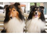 放棄金融業高薪!他開寵物友善餐廳 每天「帶狗上班」
