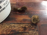 網敲碗「木板長牛肚是什麼?」 專家:蜂窩菌屬多孔菌