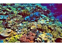 探索「南疆沃海」瑰寶 有珊瑚礁、潟湖、豐富物種