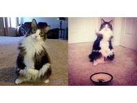 前肢發育不全無法走路...小貓用兩條腿「站著」過快樂日子