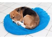 狗狗老縮一團「睡搞搞」? 汪星人「球狀睡姿」2大原因