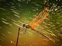 價值30萬蜻蜓曝光!榮登國家地理榜首