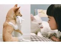 濟州島民宿家其實有三寶!貓×狗×小女兒的超有愛日常