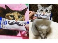 寵物食品還能這樣玩!貓糧小道具讓喵星人一秒變超萌