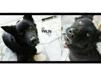 黑狗被家人送養 她真情告白:你教會一個無知女孩負責任