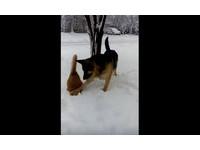 大狗湊近小貓…冷不防把牠頭「種」進雪堆 打完就落跑