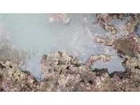 踏勘「大潭藻礁」地景 戳破中油聲稱沒有藻礁謊言