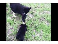 貓皇一記「如來貓掌」壓頭 零秒制伏屁孩小黑狗