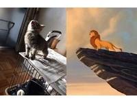 小奶貓「抬頭挺胸」霸氣外漏 網:聽到獅子王主題曲啦!