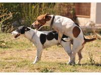 男與狗人獸交「拔不出來」 正義鄉民目睹衝上前「巴頭」
