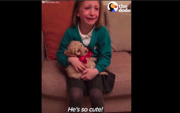 咪送贵宾狗宝 小萝莉光速飙泪 最棒圣诞礼图片