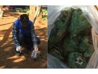 林口竹林寺公園毒餌散落 家犬、松鼠狂吐「胃都綠色的」
