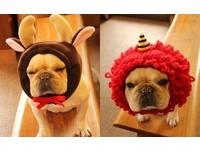 媽媽你不要再玩我了喔~狗狗專用造型帽你要買哪一頂?