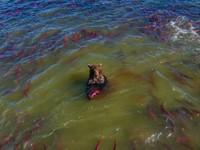大秀無辜眼神!Google地圖拍到俄羅斯「棕熊捕魚」