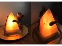 小貓抱著「銷魂鹽燈」仰頭睡著 驚醒!要抱緊一點才行