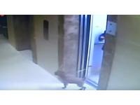 8旬嬤帶狗進電梯…沒注意牠跑出去 狗狗慘遭吊頸勒斃