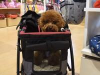 寵物陪逛街終於不用滿臉無奈!全台首座「狗樂園」商場