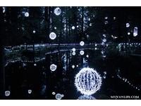 聖誕燈飾再進化!卡佩蘭諾吊橋公園一路美到1月8日