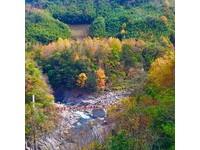 吊橋、溪谷、滿滿的楓林如詩如畫 北台灣絕美賞楓秘境