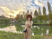季節限定!金黃落羽松映照湖畔 新竹隱藏版景點超夢幻