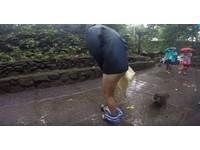 「牠想要我的香蕉!」 男遊客慘遭峇里島猴脫褲露屁屁