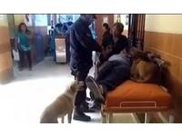 他受傷送醫 2愛犬著急跟上救護車...輕舔安慰:爸爸快好起來