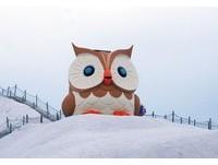 2層樓高「巨型貓頭鷹」七股鹽山賣萌 無辜大眼還會發光