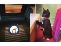 萌貓關門上廁所 影子透過百葉窗...竟曝光「真身」!