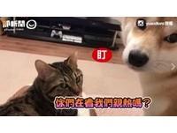 犬貓CP曬恩愛!互相親親又舔舔 閃瞎一票網友…