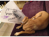 頭套小確幸!馬麻畫噴火恐龍 米克斯變身「狗吉拉」